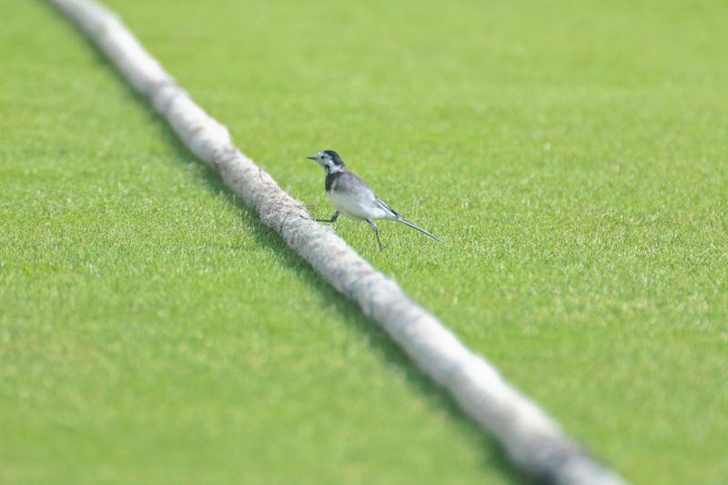 cricket boundary