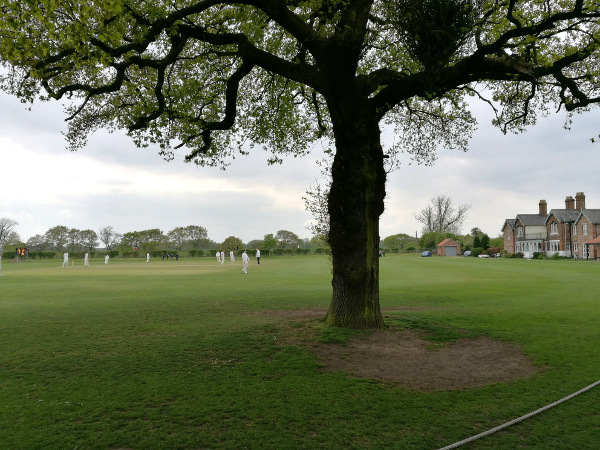tree inside the boundary at clifton alliance cricket club