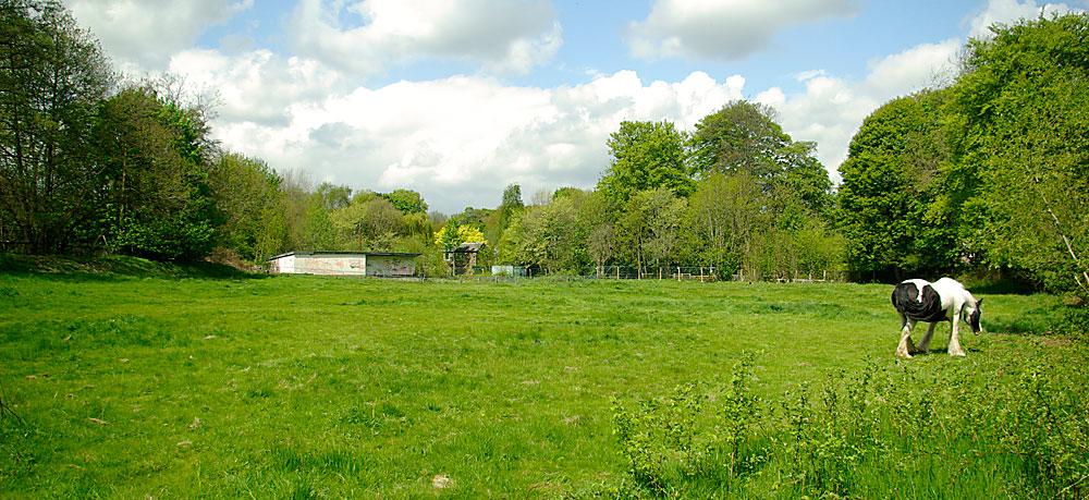 highbury cricket