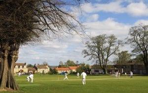 thornton-watlass-cricket-tree